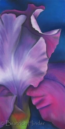 die violette Iris