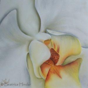 Orchidee weiss, wenig gelb, Nahaufnahme, gemalt mit Pastellkreide